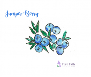 clip freeuse Berries . Berry clipart juniper berry.