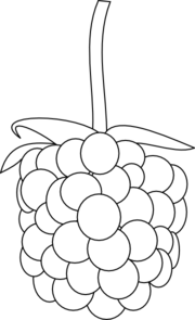 banner library stock Blackberry drawing easy. Collection of free berries