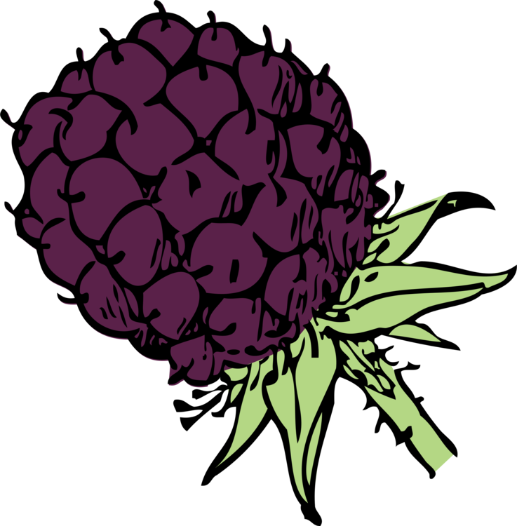 clip art free Fruit download computer icons. Blackberry drawing flower