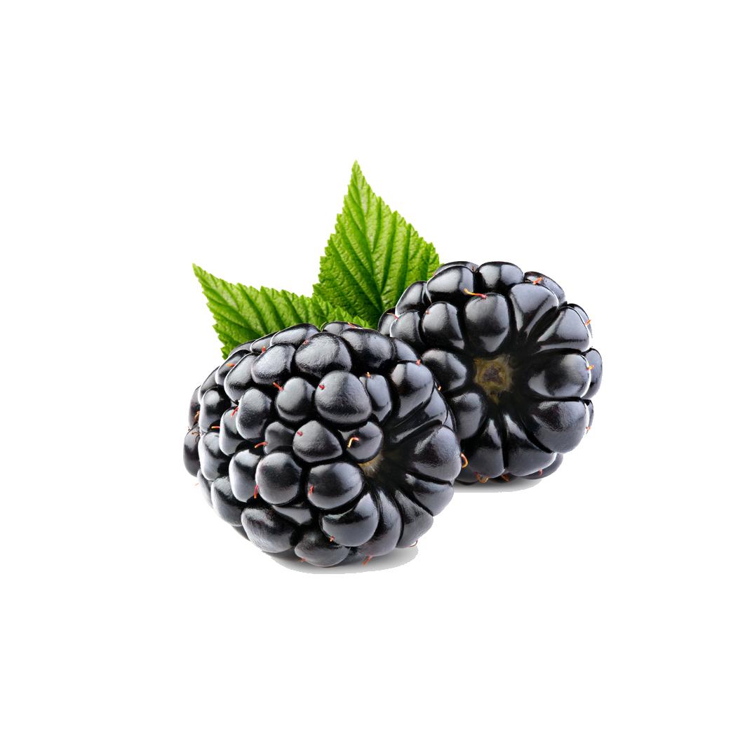 clip Blackberry drawing blueberry. Frutti di bosco raspberry