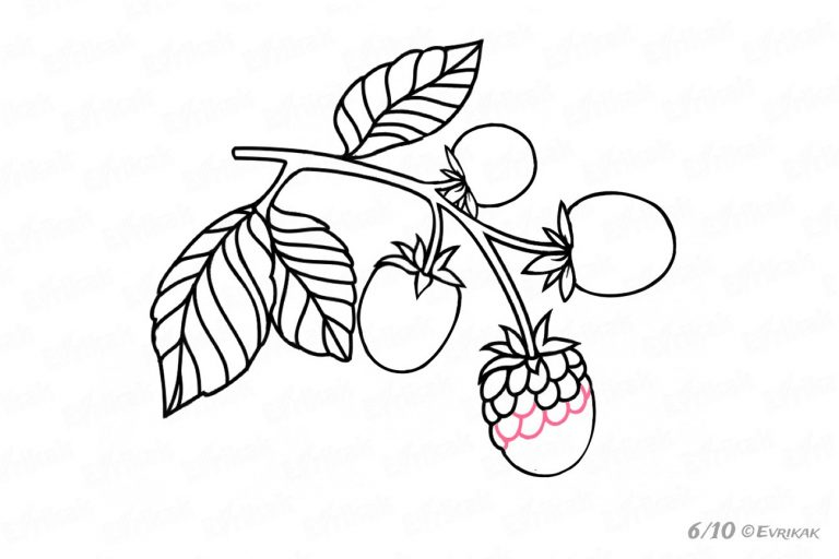 clip royalty free library How to draw a. Blackberry drawing sketch