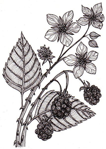 jpg royalty free Google search tattoos . Blackberry drawing flower
