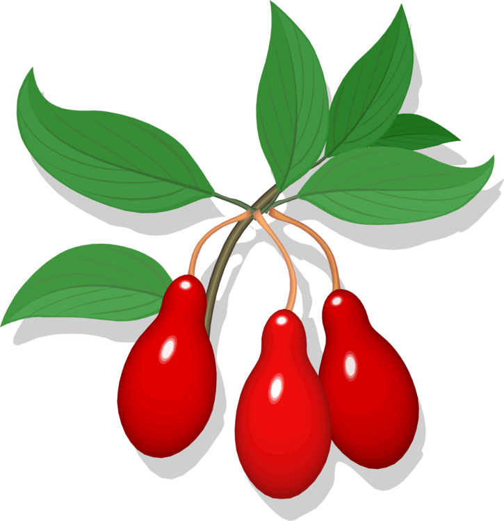 png download Berry drawing cherry. Line art fruit auglis