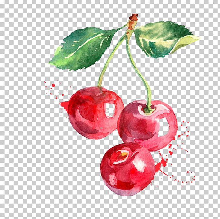 vector transparent Berry drawing cherry. Watercolor painting graphics png