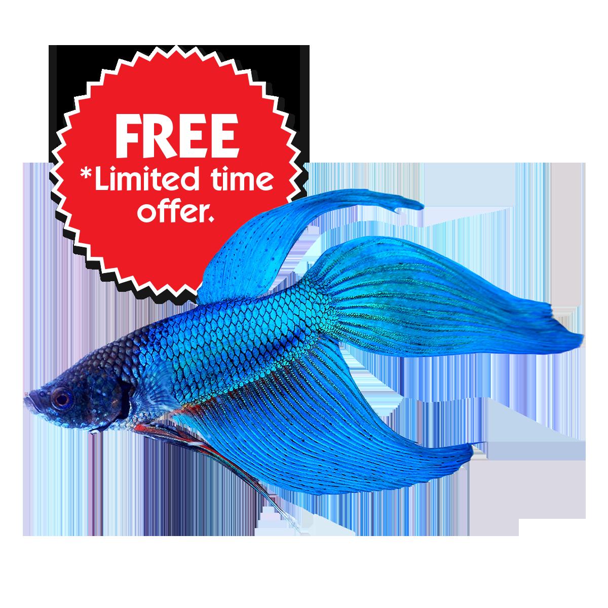 graphic Buy Betta Fish Online