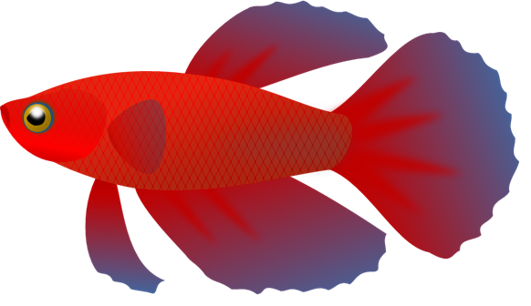 png freeuse stock Betta clipart transparent fish