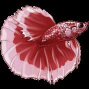 freeuse stock Betta Fish red by Nerdsbyleo