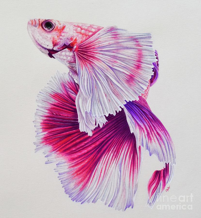 svg freeuse stock Betta Fish Sketch at PaintingValley