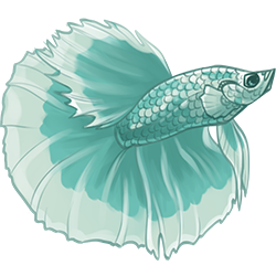 vector free download betta drawing turquoise #90101998