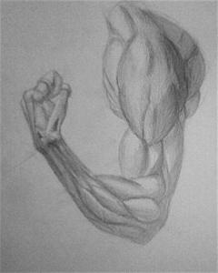 png freeuse stock Bicep drawing pencil. Muscle biceps shizo lv