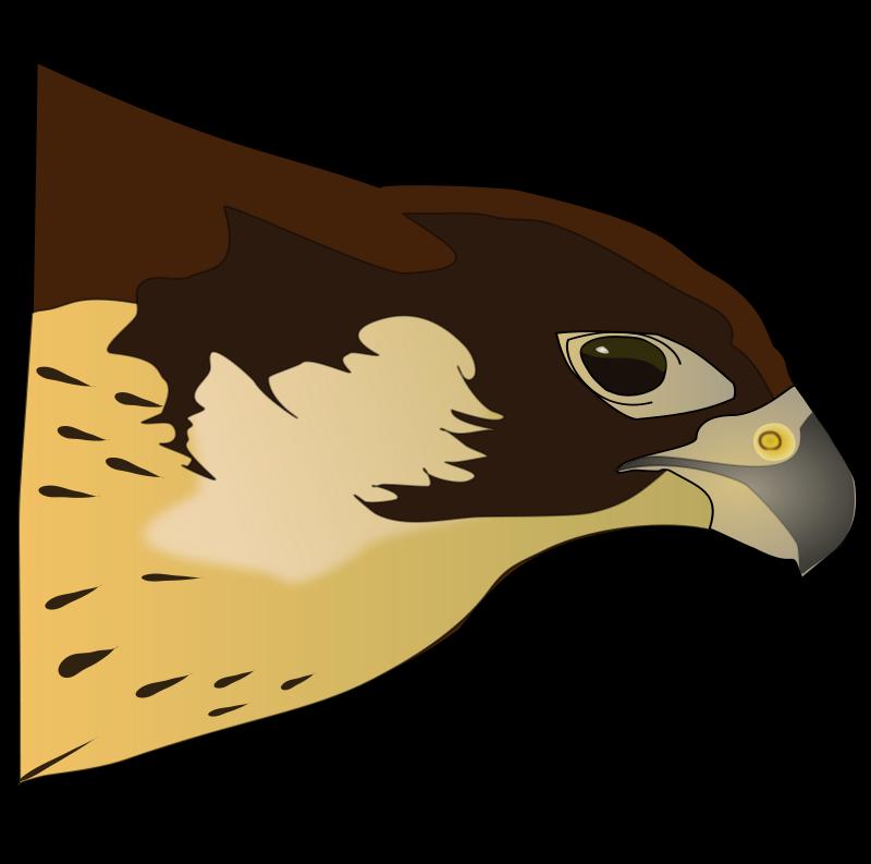 image free library Big clipart prey. Group hawk clip art.