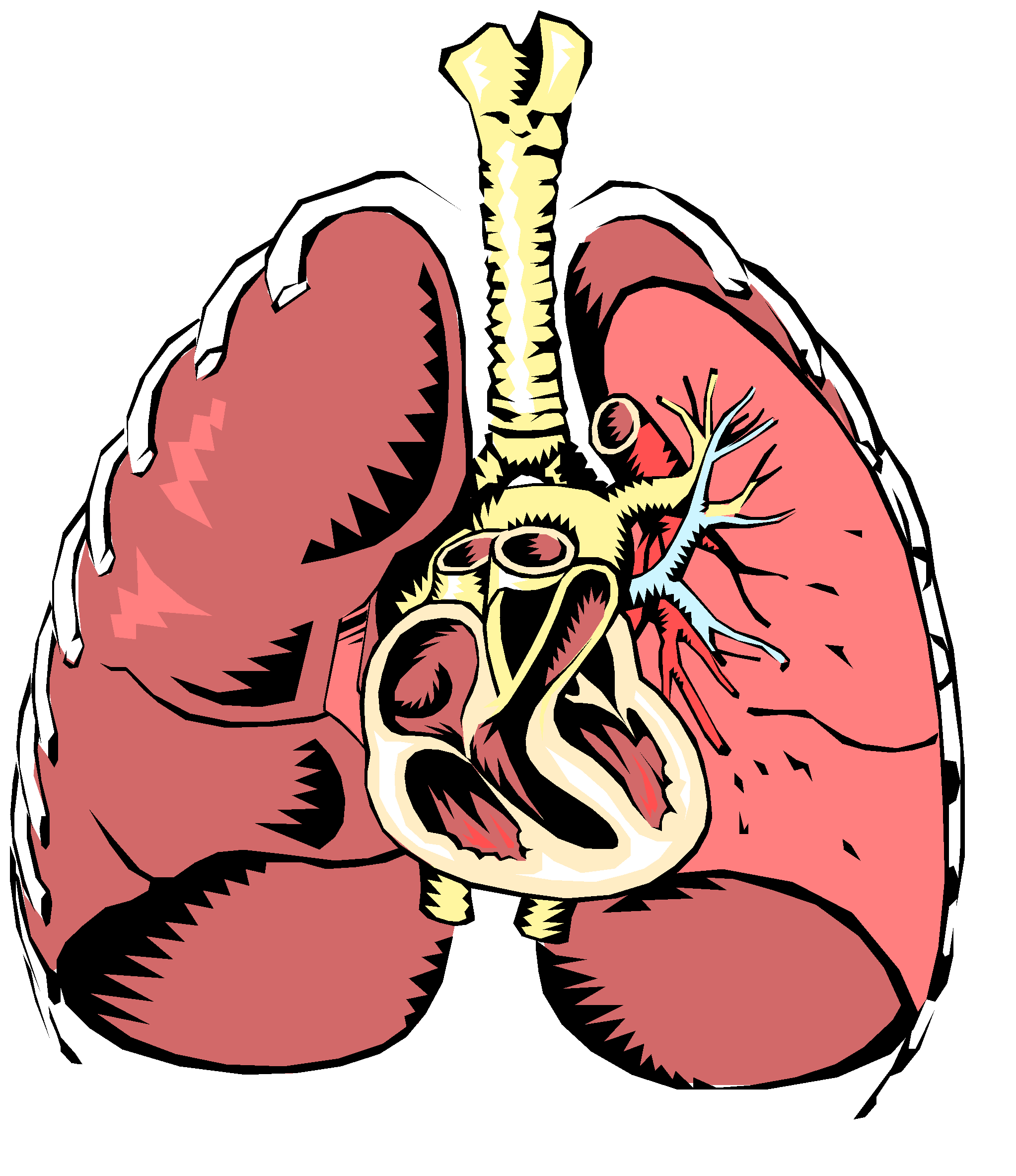 banner royalty free download System drawing at getdrawings. Biology clipart respiratory disease