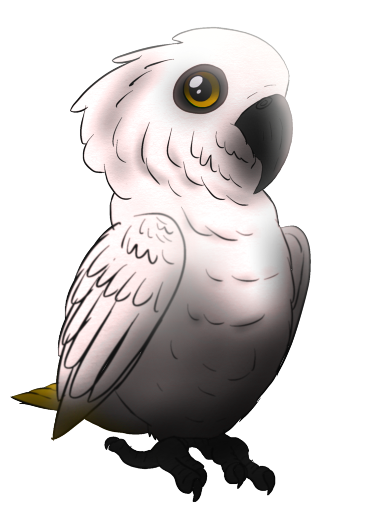 png library stock By prismaticstars on deviantart. Birb drawing cockatoo