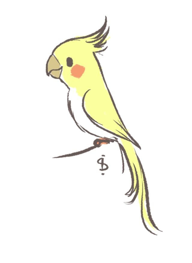 jpg transparent library Birb drawing cockatoo. Pin by kendall copeland