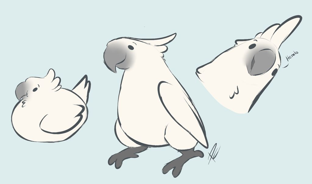 graphic royalty free download By pastel core on. Birb drawing cockatoo