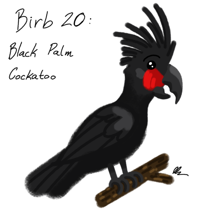 png freeuse library Birb drawing cockatoo. Decembirb black palm by
