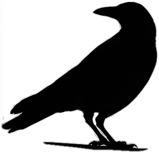 vector transparent stock Blackbird drawing dead crow. Raven silhouette standing final
