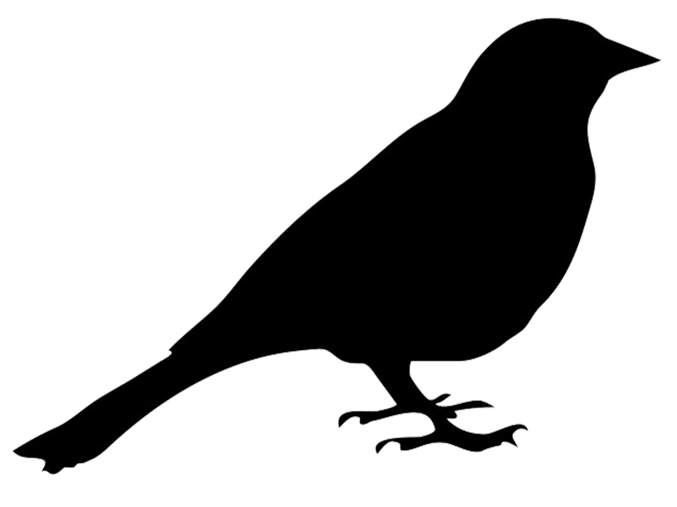 banner free Bird transparent png stickpng. Blackbird drawing silhouette
