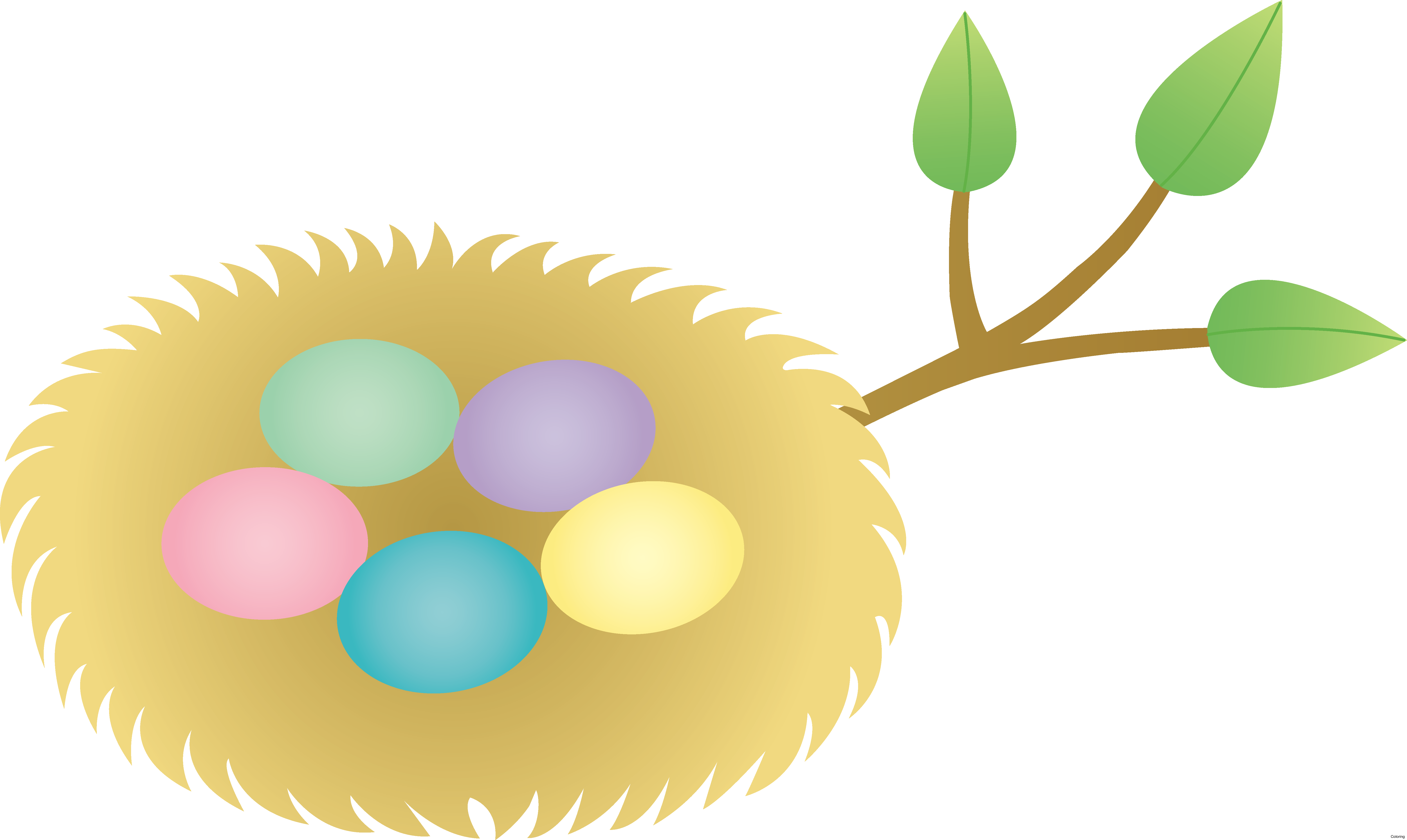 library Bird nest Egg