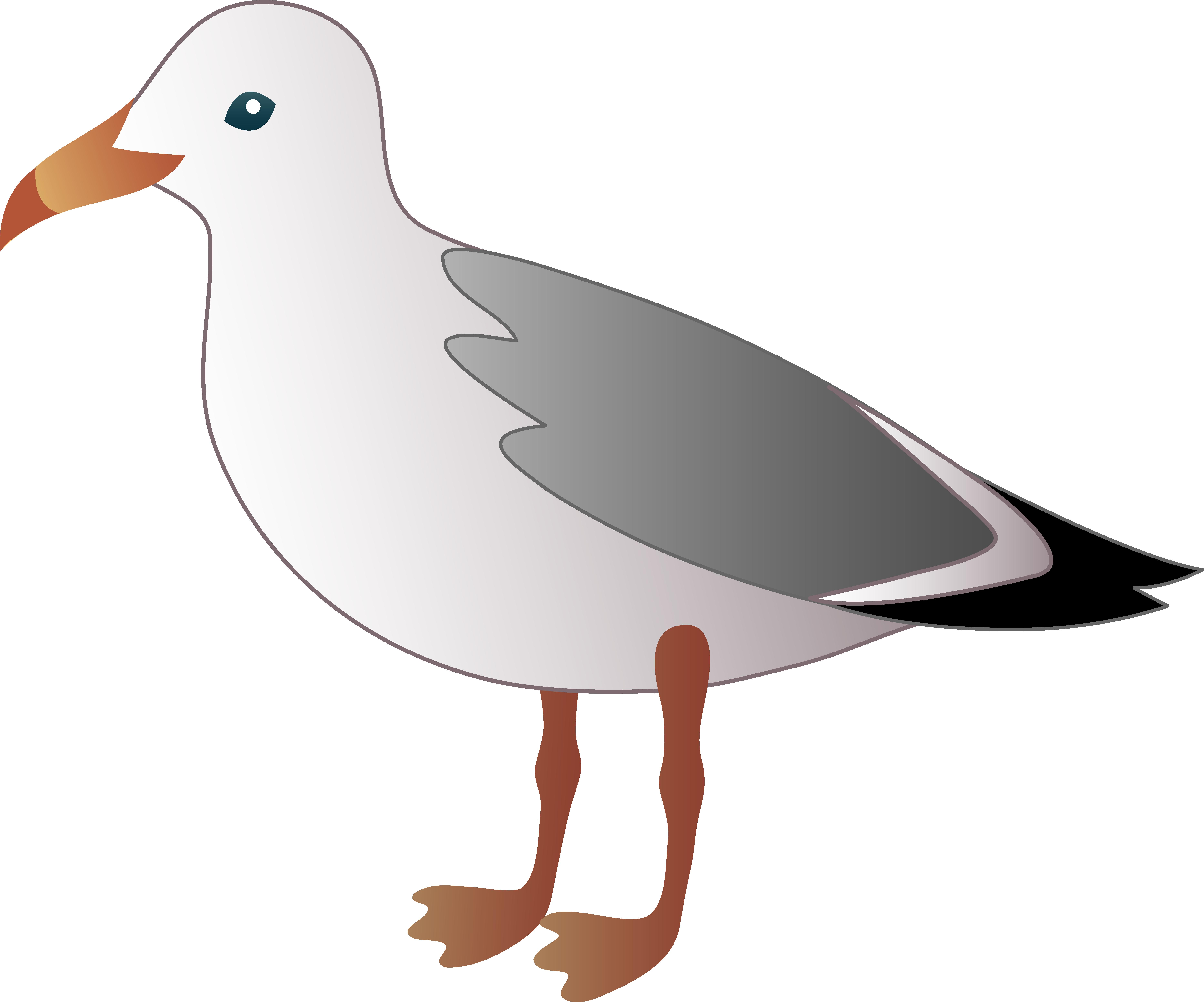 png free Birds clipart beach. Bird clipground flyijg clip