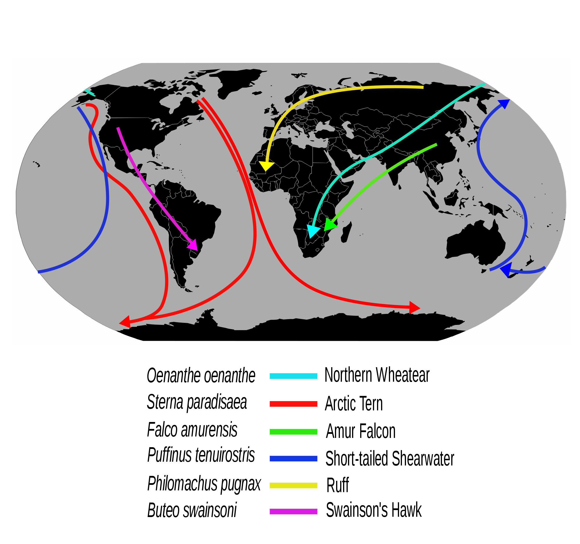 image freeuse library Valerie vector earth 17122. Bird migration wikipedia