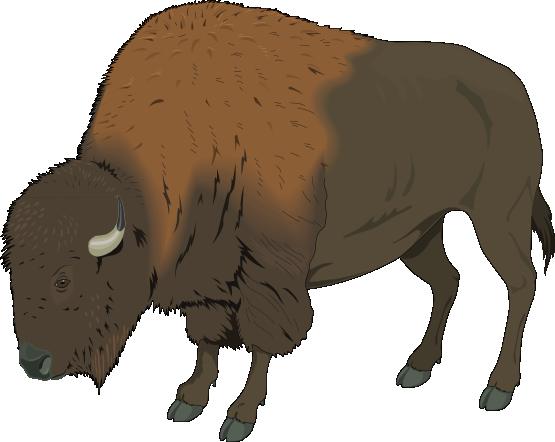 clipart Bison clipart. Free realistic clip art