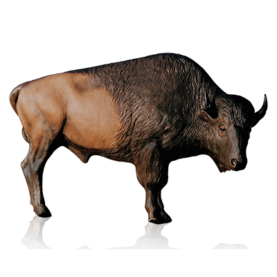jpg royalty free stock Bison clipart. Png mart