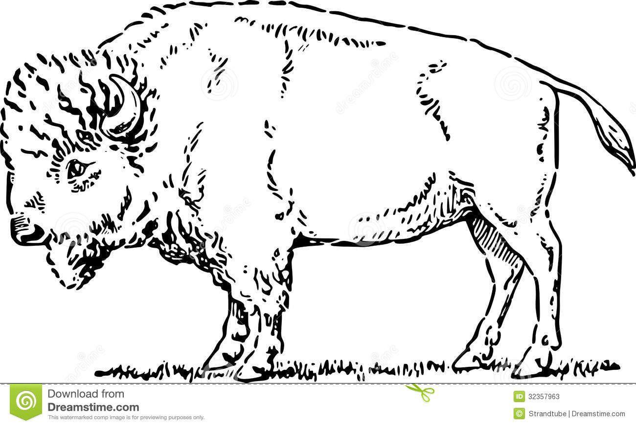 clipart transparent stock Bison clipart sketches. White buffalo buffalos art.