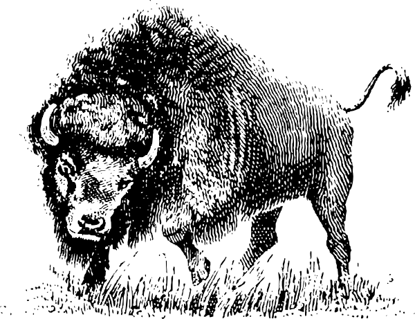 graphic transparent library Bison clipart sketches. Buffalo clip art at.