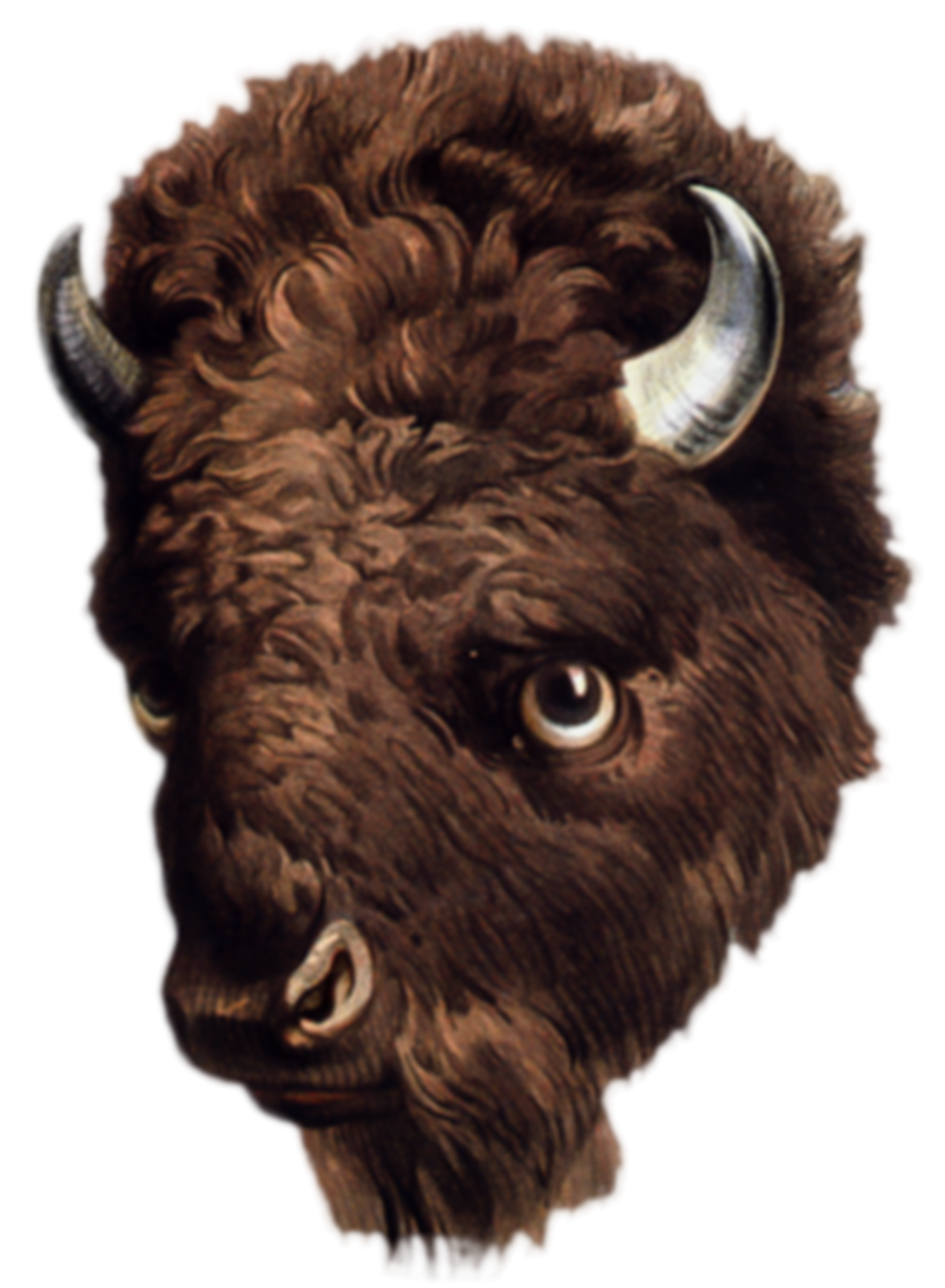 image freeuse download Paintings clip dans board. Buffalo head clipart.