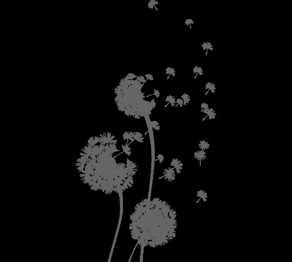 banner library download Freetoedit dandelionseeds png transparentbac. Dandelions drawing female