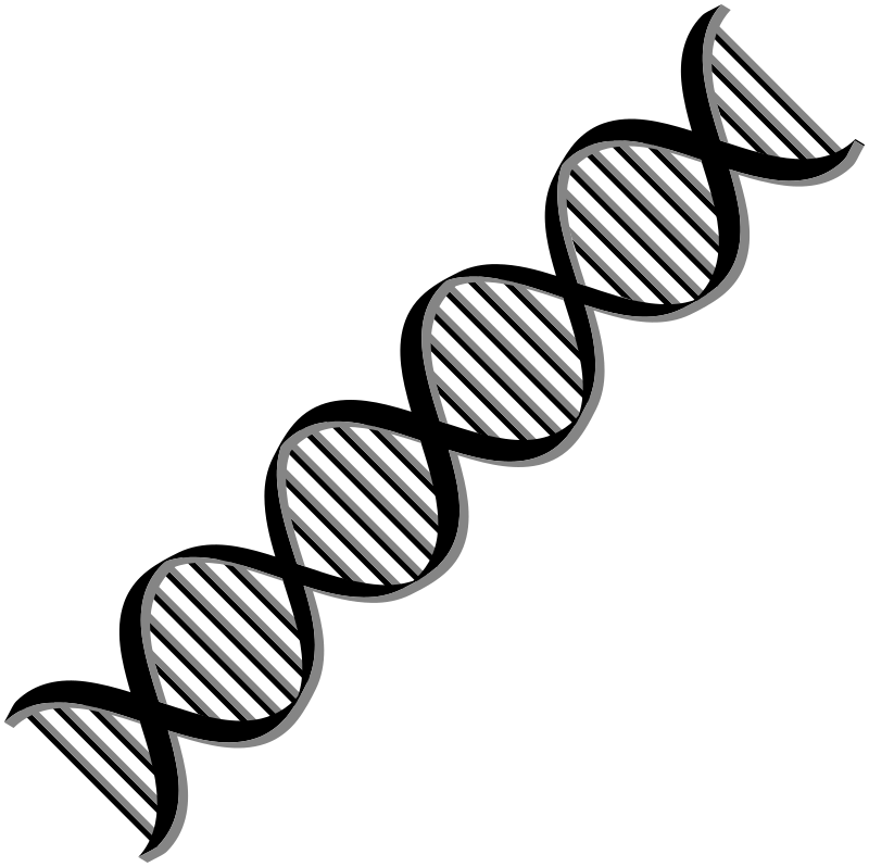 transparent Black and white dna clipart. Helix medical anatomy png