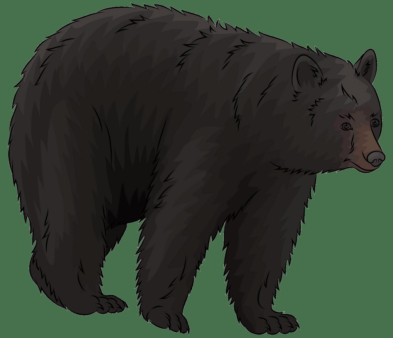 clip art transparent stock American free download creazilla. Black bear clipart