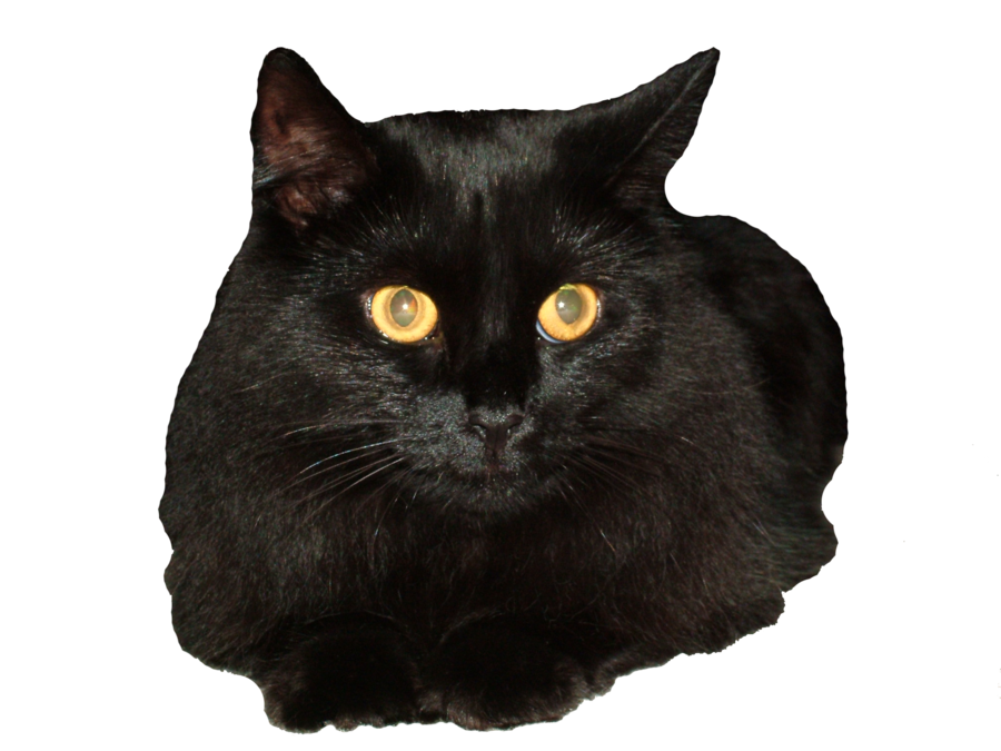 svg Ekd gigi the by. Black cat face clipart