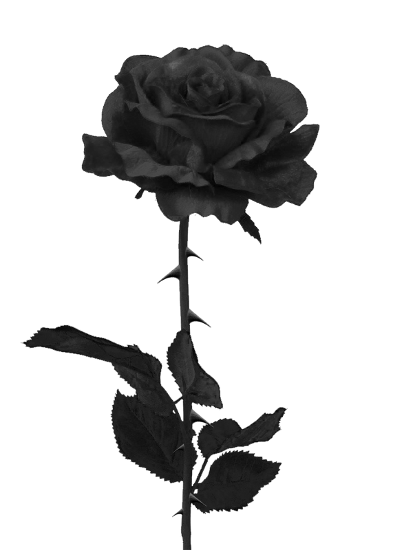 royalty free download black rose clipart #58319722