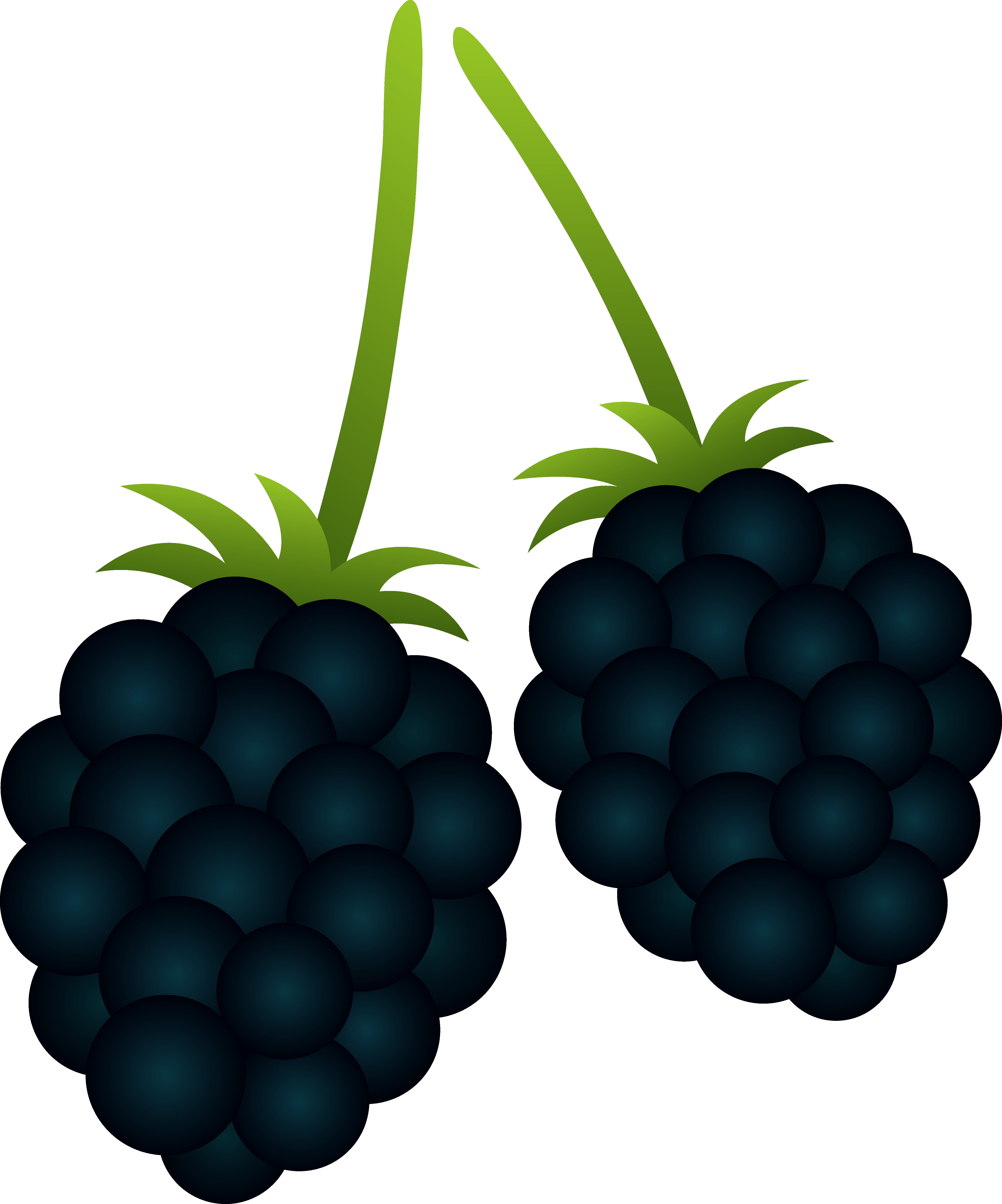 png black and white Cartoon . Blackberry drawing bush