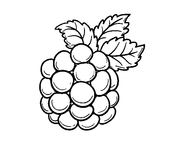 jpg free Blackberry drawing. Coloring page coloringcrew com