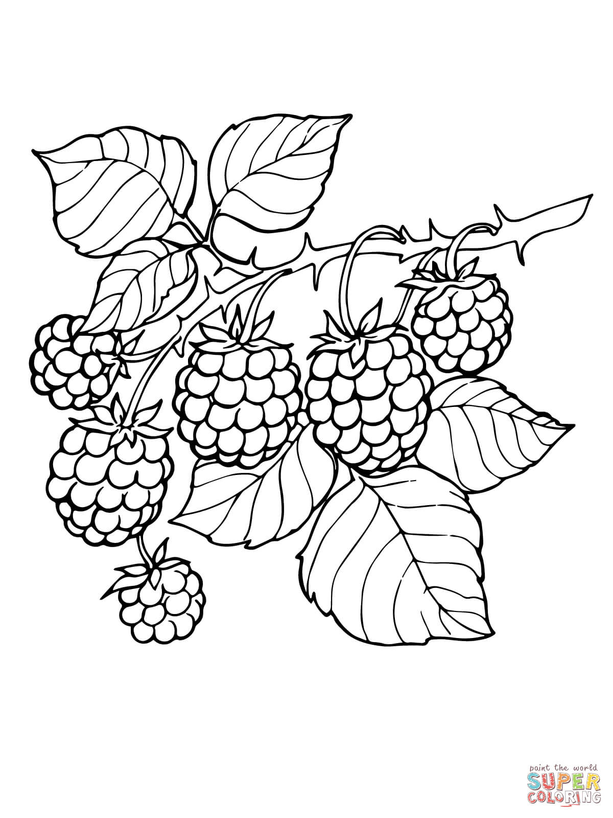 vector black and white download Branch page free printable. Blackberry drawing coloring