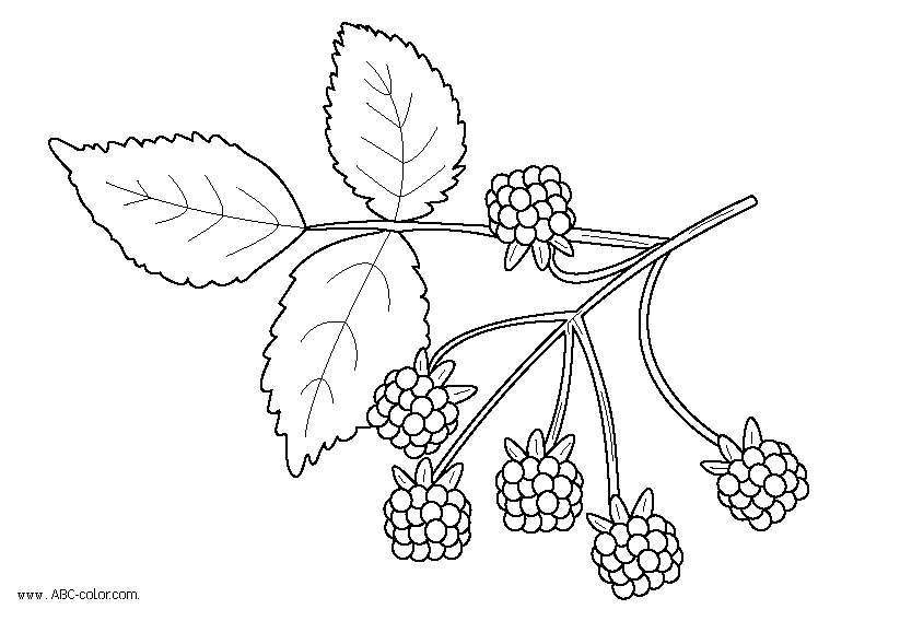 clip black and white Blackberry drawing coloring. Raster