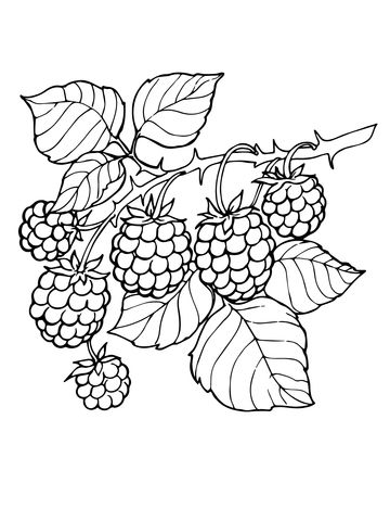 clip royalty free stock Branch page from category. Blackberry drawing coloring