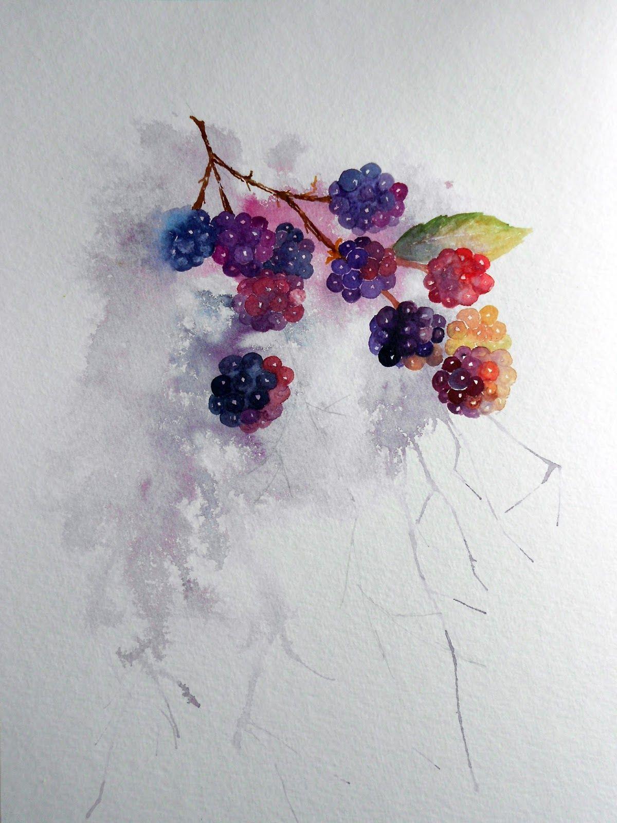 image stock Watercolour florals blackberries again. Blackberry drawing watercolor