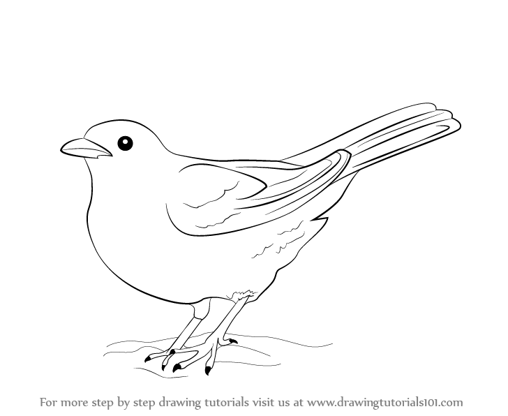 image free library Learn how to draw. Blackbird drawing.