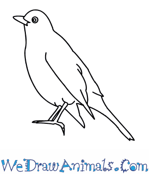 image black and white Blackbird drawing. How to draw a.