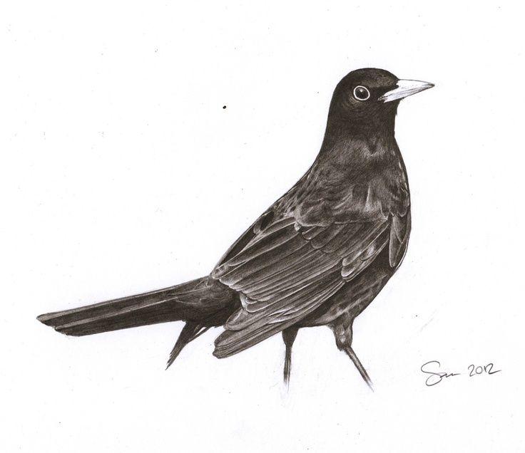 svg library stock Bird pencil drawings art. Blackbird drawing