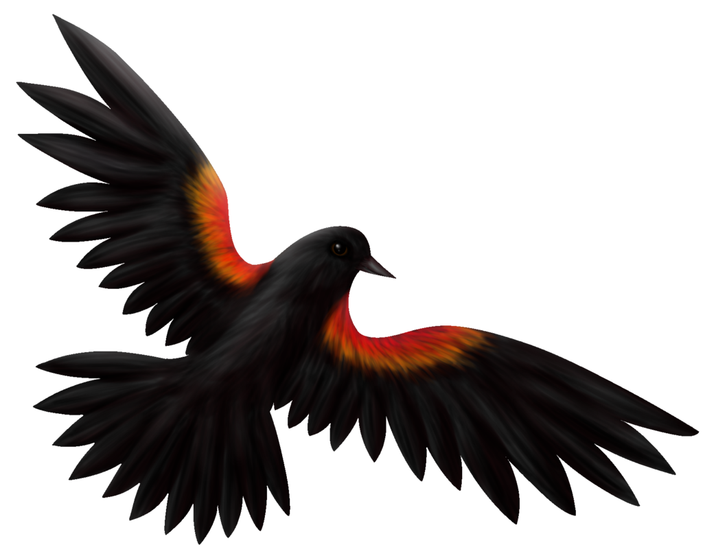 graphic freeuse library Blackbird drawing cartoon. Red winged by roseruby