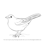 clip art Blackbird drawing easy. Learn how to draw