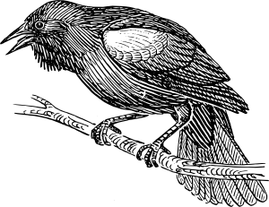 royalty free Singing in the dead. Blackbird drawing pen