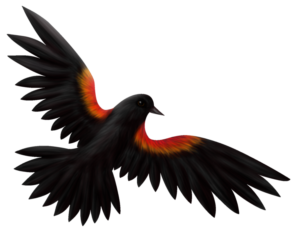 picture free library Blackbird drawing red winged. By roseruby on deviantart