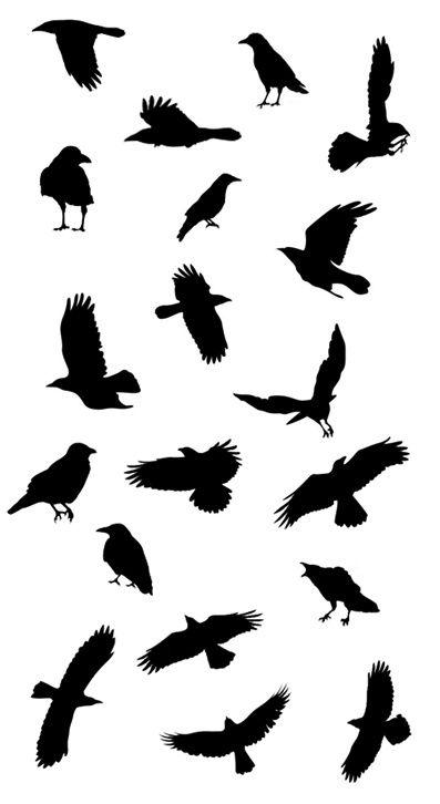 clip library Blackbird drawing stencil. Crows ravens raven tattoo
