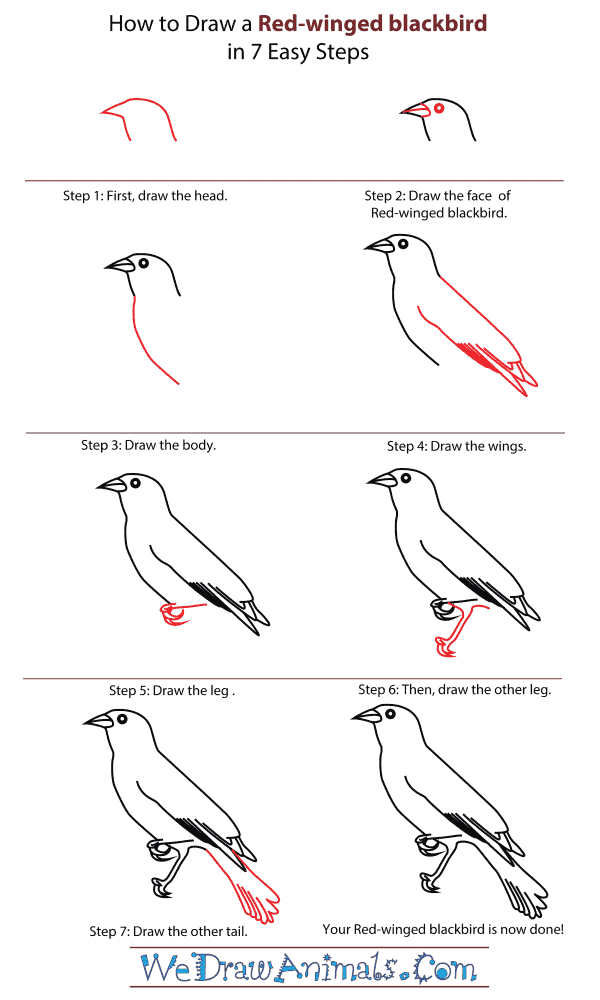 banner stock Blackbird drawing step by. How to draw a